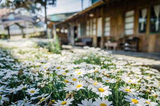 flowers-4390337__340.jpg