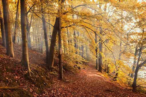 autumn-forest-4561344__340.jpg